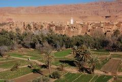 Piantagione nella gola Marocco del canyon immagine stock libera da diritti