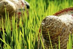 Piantagione Straw Hat Concept del raccolto della Malesia degli agricoltori del riso Immagini Stock