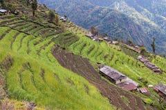 Piantagione a terrazze sui pendii della collina nel Nepal Fotografie Stock