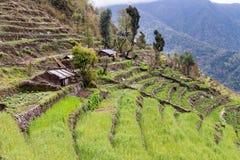Piantagione a terrazze sui pendii della collina nel Nepal Fotografia Stock Libera da Diritti