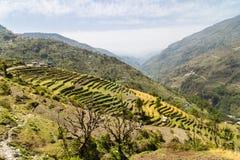 Piantagione a terrazze sui pendii della collina nel Nepal Fotografie Stock Libere da Diritti
