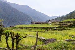 Piantagione a terrazze sui pendii della collina nel Nepal Immagini Stock Libere da Diritti