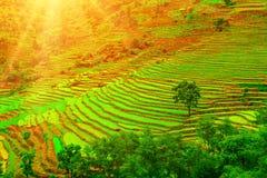 Piantagione verde nella mattina Fotografia Stock Libera da Diritti