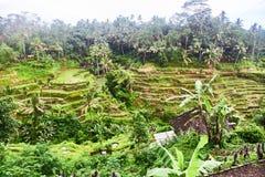 Piantagioni del riso in Bali Vista da sopra fotografia stock
