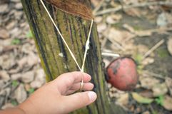 Piantagioni dell'albero di gomma nella Sumatra Settentrionale, Indonesia fotografia stock