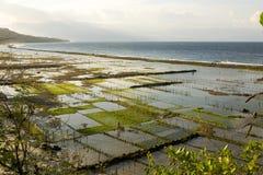 Piantagioni dell'alga, Nusa Penida, Indonesia Fotografia Stock Libera da Diritti
