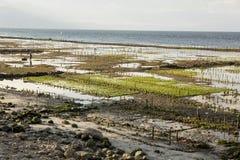 Piantagioni dell'alga, Nusa Penida, Indonesia Immagini Stock