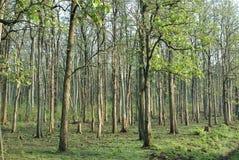 Piantagioni dell'gestione-albero della foresta Fotografie Stock