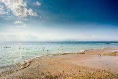 Piantagioni di alga sulla spiaggia, alghe a bassa marea Immagine Stock