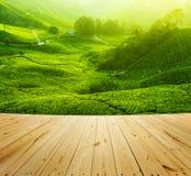 Piantagioni di tè Immagini Stock Libere da Diritti