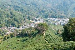 piantagioni di tè fotografie stock