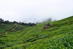 Piantagioni di tè con le colline nuvolose vicino a Munnar, Kerala, India Fotografia Stock