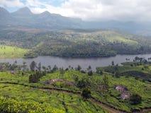 Piantagioni di tè con un fiume che passa attraverso il mezzo Fotografie Stock
