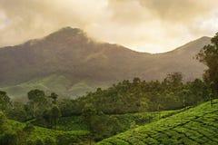 Piantagioni di tè della montagna in Munnar Fotografie Stock