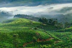 Piantagioni di tè della montagna in Munnar Immagini Stock Libere da Diritti