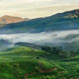 Piantagioni di tè della montagna in Munnar Immagine Stock Libera da Diritti