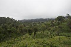 piantagioni di tè Ella, Sri Lanka Fotografia Stock