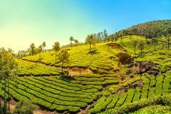 Piantagioni di tè in Munnar, Kerala, India immagine stock libera da diritti