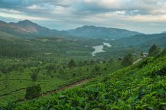 Piantagioni di tè nelle colline immagine stock