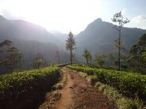 Piantagioni di tè nelle montagne dello Sri Lanka fotografia stock