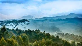 Piantagioni di tè nello stato Kerala, India Fotografia Stock Libera da Diritti