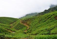 Piantagioni di tè sopra le colline verdi di Munnar, Kerala, India Fotografie Stock