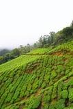 Piantagioni di tè sopra le colline verdi di Munnar, Kerala, India - sfondo naturale Fotografie Stock