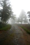 Piantagioni di tè in Sri Lanka Fotografia Stock