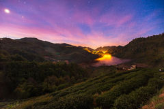 Piantagioni di tè sulla montagna del angkhang Immagine Stock Libera da Diritti
