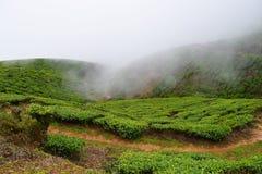Piantagioni di tè in una proprietà del tè sopra Misty Hills, Munnar, Kerala, India Immagini Stock Libere da Diritti