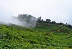 Piantagioni di tè in una proprietà del tè sopra Misty Hills, Munnar, Kerala, India Fotografia Stock Libera da Diritti