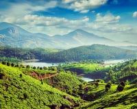Piantagioni e fiume di tè in colline vicino a Munnar, Kerala, India fotografie stock