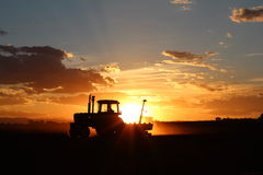 Piantando al tramonto Fotografia Stock