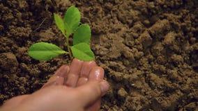 Piantando gli alberi, amando l'ambiente e proteggendo natura che nutrisce la Giornata mondiale dell'ambiente delle piante per aiu stock footage
