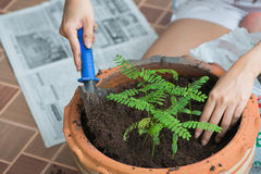 Piantando gli alberi a casa Immagini Stock Libere da Diritti