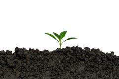 Piantando gli alberi nella terra l'ambiente e l'ecologia fotografia stock