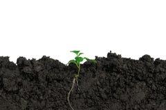 Piantando gli alberi nella terra l'ambiente e l'ecologia fotografia stock libera da diritti