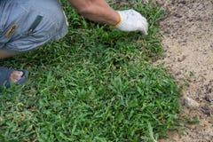 Piantando lo strato dell'erba su terra, Fotografia Stock