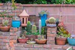 Piantatrice del succulente del deserto Fotografie Stock Libere da Diritti