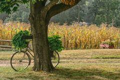 Piantatrice della bicicletta Fotografia Stock Libera da Diritti