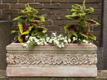 Piantatrice rettangolare della scatola di terracotta con i motivi del fiore che contengono coleus abbastanza di fioritura fotografia stock