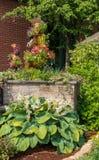 Piantatrice variopinta con gli annuali di fioritura e una grande hosta nella priorità alta fotografia stock