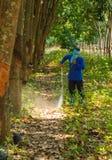 Piantatrici di gomma Fotografie Stock Libere da Diritti
