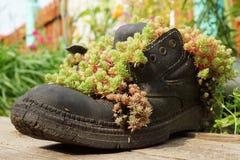 Piantatrici originali della via, stivali con la pianta Fotografia Stock Libera da Diritti