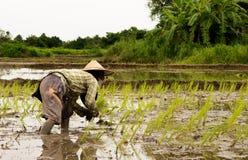 Piantatura degli agricoltori Fotografia Stock Libera da Diritti