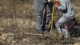 Piantatura degli alberelli dell'albero Ripristino della foresta, protezione di ecologia archivi video
