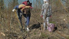 Piantatura degli alberelli dell'albero Ripristino della foresta, protezione di ecologia video d archivio