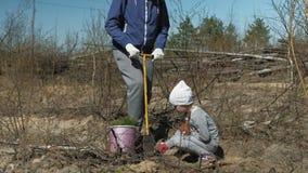 Piantatura degli alberelli dell'albero Ripristino della foresta, protezione di ecologia stock footage