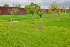 Piantatura degli alberi da frutto fotografia stock
