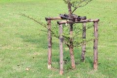 Piantatura degli alberi in giardino con la struttura di legno del mucchio del palo fotografia stock